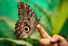 Photos from a visit to The Butterfly Farm in Mindo, Ecuador, a 29-hectare reserve that's home to 1200 butterfly species