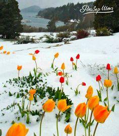 Вот и наступила весна 💐 Вместе с весенним настроением появились тюльпанчики 🌷🌷 Посмотрите какой красивый пейзаж 🔭  А у вас уже появилось весеннее настроение? 🤗