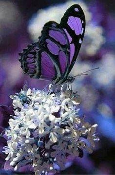 - Green butterflies – grüne schmetterlinge – papillons verts – mariposas v - Butterfly Gif, Butterfly Background, Butterfly Quotes, Butterfly Drawing, Butterfly Painting, Green Butterfly, Butterfly Crafts, Butterfly Wallpaper, Monarch Butterfly