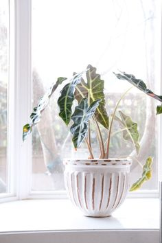 5 Trendy Decor Pieces You Can Thrift.  Want that vintage look but don't want to pay the Etsy price? Take a trip to your local thrift store! Make a list of what you are looking for and I bet you will find most of it.