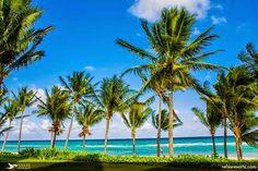 加勒比海等待着您! 您会来吗?