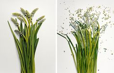 Photographer Jon Shireman soaked  flowers in a liquid nitrogen bath to rocket them into a hard platform, recording their destruction with a high speed camera.