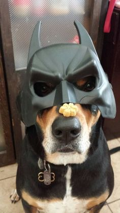 BatDog. Crazy Dogs with a wild side for adventure
