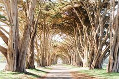 Cypress Tree Tunnel, Point Reyes National Foreshore xo