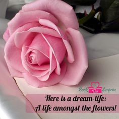 Here is a #dream-life: A #life amongst the #flowers! #garden #bookthesurprise