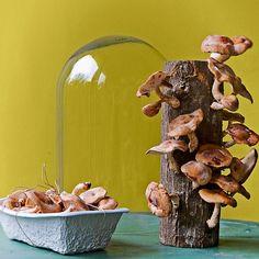 215 Best mushrooms images in 2019 | Stuffed mushrooms