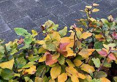 7 mooiste Haagplanten - KleineTuinen.nl Prunus, Peach