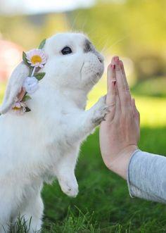 #rabbit #highfive