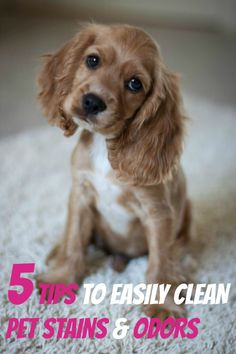 5 simple tips to easily clean pet stains and odors from OmegaPet.  http://www.myomegapet.com/petodor