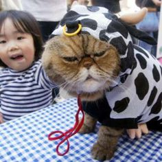 21 Cats in Costume Who Want to Kill Their Owners
