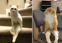 25 фотографий, которые доказывают: коты эволюционируют в человека!