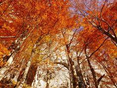 Beautiful autumn - Steiermark