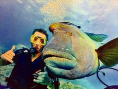 Scuba diving in the Great Barrier Reef with this big ole' Humphead Wrasse!   #travel #traveling #places_wow #wonderful_places #love #beauty #travelgram #travelingram #bestvacations #aroundtheworld #wowplacestogo #welivetoexplore #getoutandexplore #adventure #wanderlust #lifeisgood #youngwildandfree #young #wild #free #memories #travelawesome #australia #cairns #greatbarrierreef #thegreatbarrierreef #scuba #scubadiving #thelanddownunder by youngwildandfreememories http://ift.tt/1UokkV2