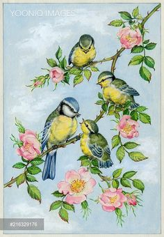 ru / Photo # 94 – 2 – - paint and art Bird Painting Acrylic, Watercolor Bird, Fabric Painting, Painting & Drawing, Watercolor Paintings, Pretty Birds, Beautiful Birds, Clipart Baby, Bird Coloring Pages