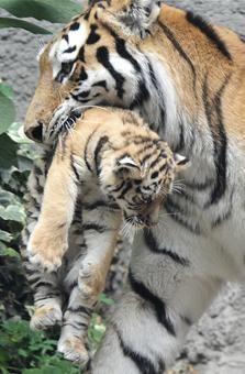 Baby animals make debuts at zoos - USATODAY.com Photos