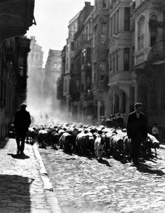1928'in Kurban Bayramı öncesi... Kurbanlıklar satılmak üzere götürülüyor. O devirde İstanbul'da kurban olarak büyükbaş hayvan kesilmiyor, insanlar koyun ve koça rağbet ediyor.