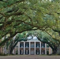 Sweet SOUTHERN Charm ✧ entry graced with angel oak trees