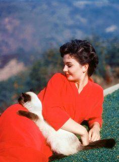 Jean Simmons with a feline friend, 1954.