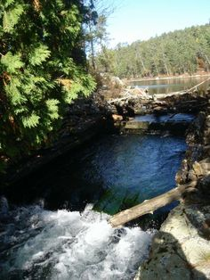 On of the last logging flumes in Chiniguchi Reserve