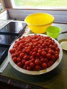 Tomaatit ovat kypsyneet