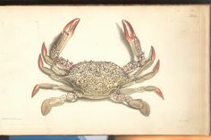 Herbst Crabs & Lobsters Plate L