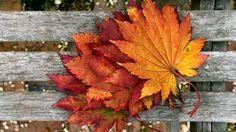 Leaves. Striking image of fall.