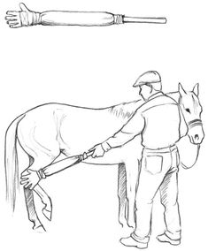 How to Prepare Your Horse for the Farrier