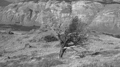 Ho confidato al vento i miei segreti, introvabile silenzio del parlare. E il vento ha rivelato i desideri nascosti all'albero, che ne ha fatto compagnia scuotendosi, come i tuoi capelli sciolti.        (Valle del Rio de Las Vueltas, El Chalten)
