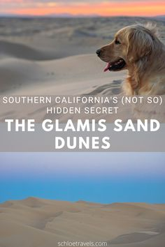 The Glamis or Imperial Sand Dunes have been a filming location since the early 1900s and their splendor has been viewed on the big screen in films such as Lawrence of Arabia, Flight of the Phoenix, Star Wars: Return of the Jedi, and most recently, Jumanji: The Next Level. Not only are the Glamis Sand Dunes a popular film spot, but they are also an increasingly popular off-road vehicle location, photography spot, and all-around epic adventure site. Check it out on our blog! #schloetravels #glamis California Destinations, Road Trip Destinations, Visit California, California Travel, Travel Guides, Travel Tips, Usa Travel Map, Travel Essentials For Women, United States Travel