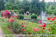 Sommer 2016 Urlaub 199 Nancy Lorraine, Saint, Roses, Summer 2016, Pink, Rose