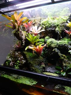 terraced with cork bark. Hardscape on page Note trailing plant hanging from branch.Vivarium terraced with cork bark. Hardscape on page Note trailing plant hanging from branch. Terrariums, Gecko Terrarium, Reptile Terrarium, Dendrobates Terrarium, Crested Gecko Vivarium, Paludarium, Reptile Room, Aquarium Design, Reptile Enclosure