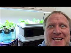 Hydroponics is a subset of hydroculture and is a method of growing plants using mineral nutrient solutions, in water, without soil Hydroponic Farming, Hydroponic Growing, Hydroponics System, Aquaponics, Permaculture, Organic Gardening, Gardening Tips, Garden Pests, Grow Your Own Food