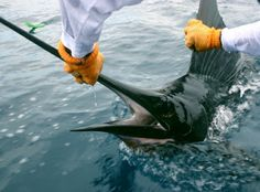 magic world around: Tamarindo Fishing Seasons by Species