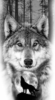 65 Ideas for tattoo wolf desing tatoo Wolf Images, Wolf Photos, Wolf Pictures, Wolf Tattoos, Animal Tattoos, Artwork Lobo, Wolf Artwork, Wolf Tattoo Design, Wolf Design