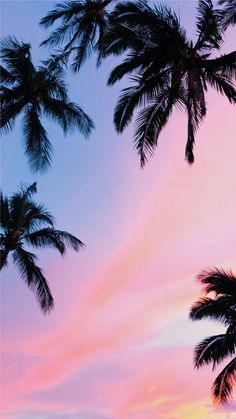 'Beautiful Pink Sunset Palm Trees' Photographic Print by newburyboutique - Wallpaper Iphone Wallpaper Winter, Beste Iphone Wallpaper, Wallpaper Free, Sunset Wallpaper, Fall Wallpaper, Iphone Wallpapers, Tree Wallpaper, Pretty Wallpapers, Tumblr Wallpaper