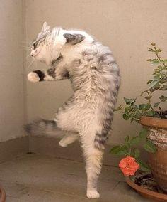 I feel like Dancin'... Dancin'...