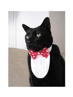 If I could get my black male cat to wear this, I would totally take him out on the town on Valentine's Day! Stretch limo, great downtown restaurant.... Well, or maybe just sit with him at home and watch a movie.