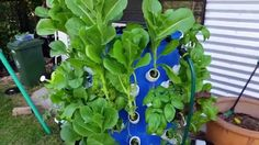 How To Build An Aeroponics Growing Tower For Vertical Gardening… – Eco Snippets Hydroponic Gardening, Hydroponics, Container Gardening, Gardening Hacks, Urban Gardening, Urban Farming, Indoor Gardening, Growing Herbs, Growing Vegetables