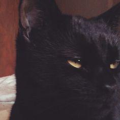 Sleepy World Domination, Cats, Animals, Gatos, Animales, Animaux, Animal, Animais, Kitty