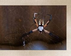 Close up of a Texas Spider - Insect Macro Photo - Large Wall Art Decor - Fine Art Photography - Canvas Gallery Wrap - Gold, Copper, Brown