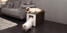 Kenzi, een exclusieve en design kattenbak, mooie krabpaal of luxe kattenmand voor in uw interieur.