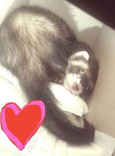 I found Oscar sleeping in the stiffer box! So cute