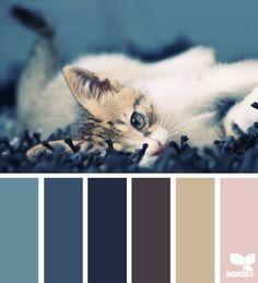 Colour stare
