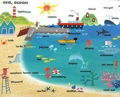 English vocabulary - the beach and ocean English Study, English Words, English Lessons, English Grammar, Teaching English, Learn English, English Language, Learning English For Kids, English Vocabulary