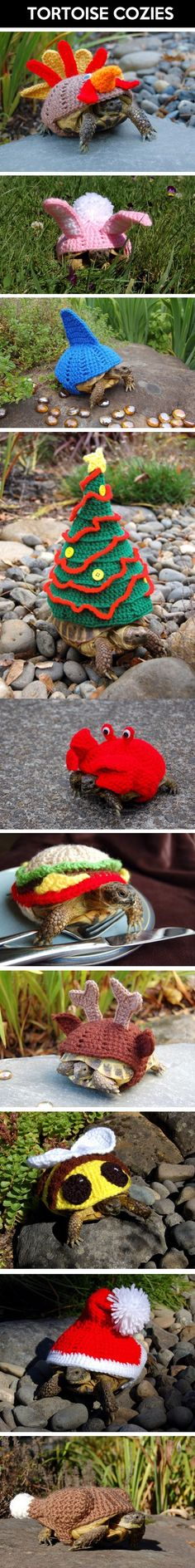 "Tortoise Cozies. Somewhere, someone is thinking, ""Alvin would love these."" And Alvin is thinking, ""Shit."""