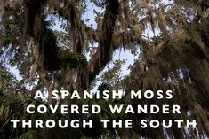 A Spanish Moss Cover