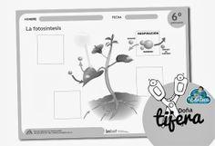Recortable sobre la fotosíntesis - http://laeduteca.blogspot.com.es/2014/04/dona-tijera-la-fotosintesis.html