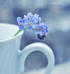 forget me nots.  remember me always. love it.
