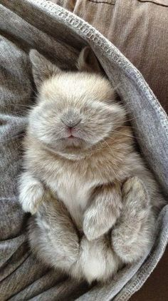 miniature rabbit asleep | Images of love, funny, hd, landscapes, actors, Pinterest and many more to share