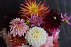 Dahlia Flower, My Flower, Flower Power, Mushroom Art, Hawaiian Flowers, Wallpaper Iphone Cute, Dream Garden, Nature Pictures, Aesthetic Pictures